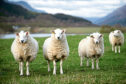 he National Sheep Association's Scottish regional branch has acknowledged it should do more to communicate with its members about work it does.