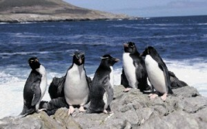 SOUTH ATLANTIC SUCCESS STORY: Rockhopper Petroleum made the major Sea Lion discovery in the North Falkland Basin