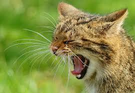 Wildcat wells
